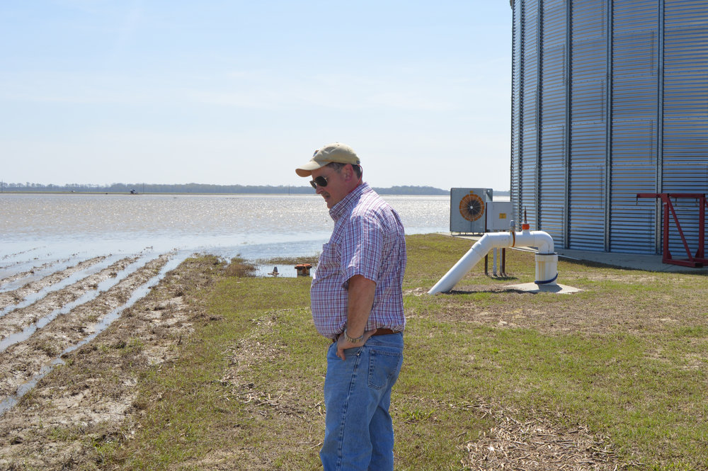 LSU AgCenter county agent Bruce Garner surveys a field in West Carroll Parish that flooded following heavy rains in March. The spring flood caused widespread damage in north Louisiana. A significant number of corn acres had to be replanted because of the flood. Photo by Tammi Arender/LSU AgCenter