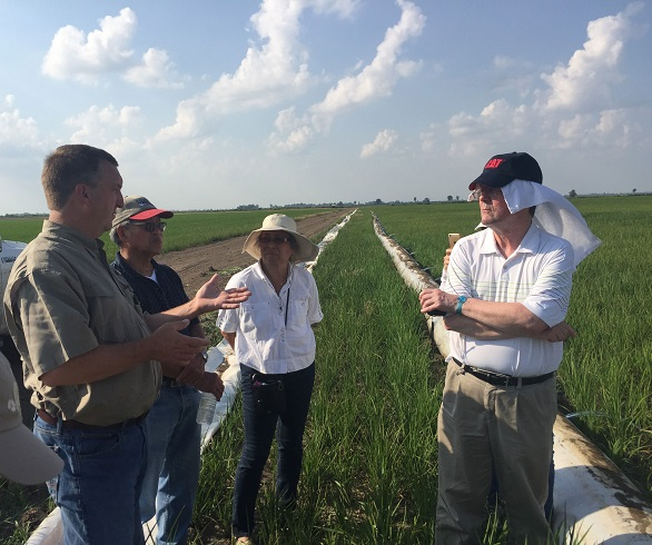 Mike Sullivan (left) explains the irrigation system on his AR rice farm to a team from Kellogg's