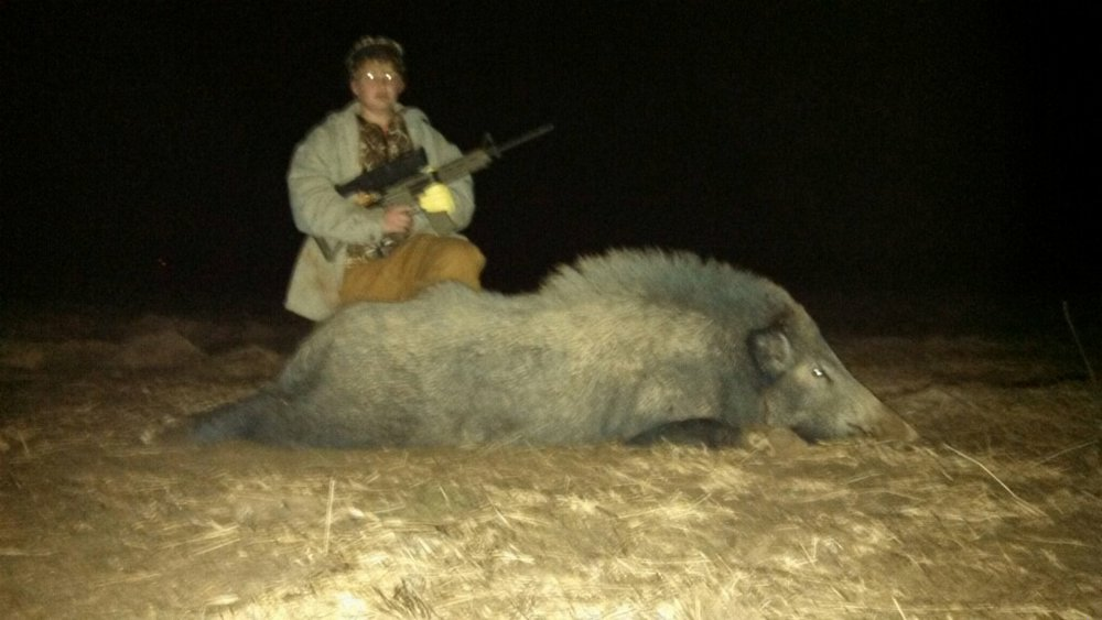 This feral hog was killed on Blake & Brandon McCartney's farm in Red River parish.  The McCartney brothers killed over 380 feral hogs on their farm in 2016.  They will still lose thousands of dollars in feral hog crop damage this season.