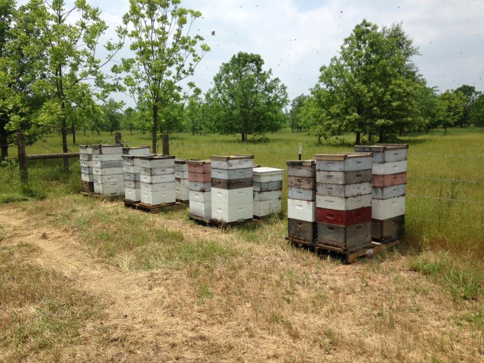 Beekeeping is a growing industry in Louisiana with nearly 700 registered beekeepers in the state.