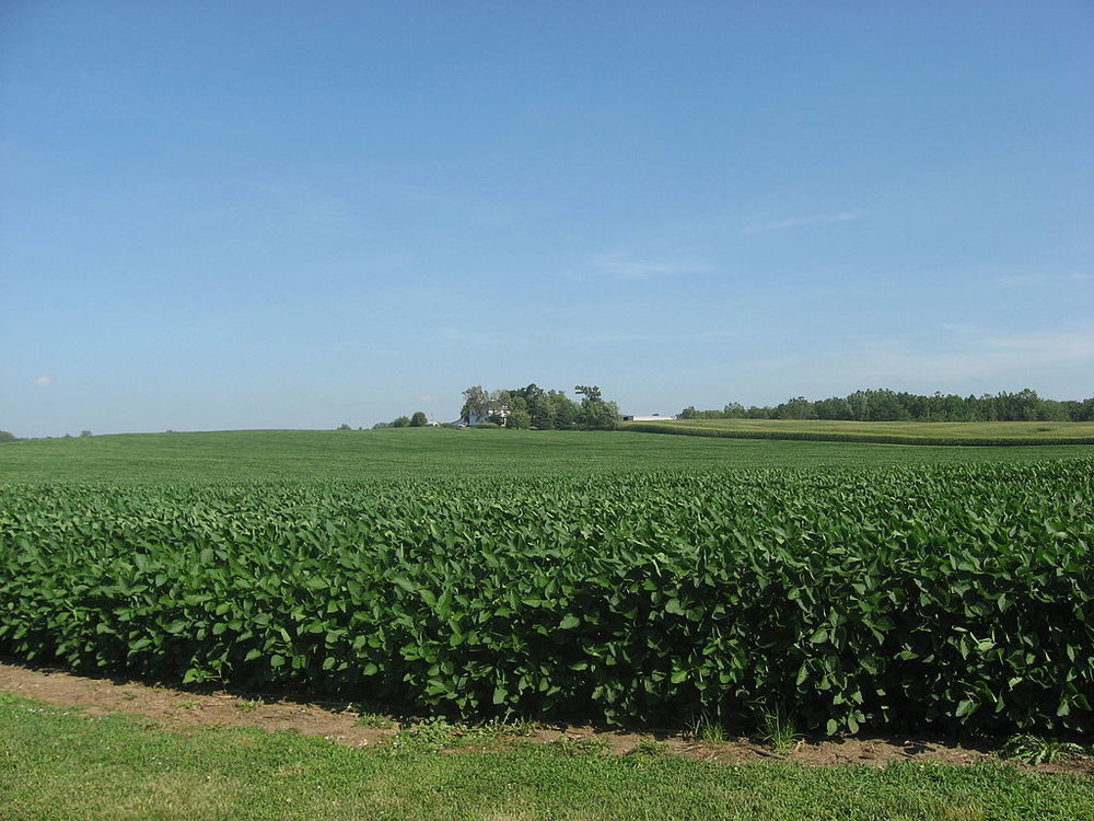 1024px-Soybean_fields_at_New_Richland.jpg