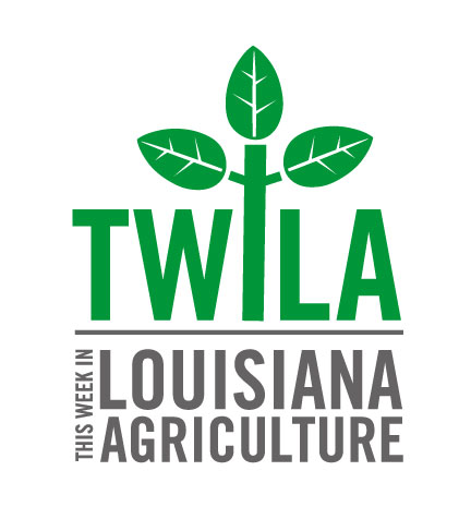 VIsit twilatv.org  To see the latest stories from the weekly television show  This Week in Louisiana Agriculture.