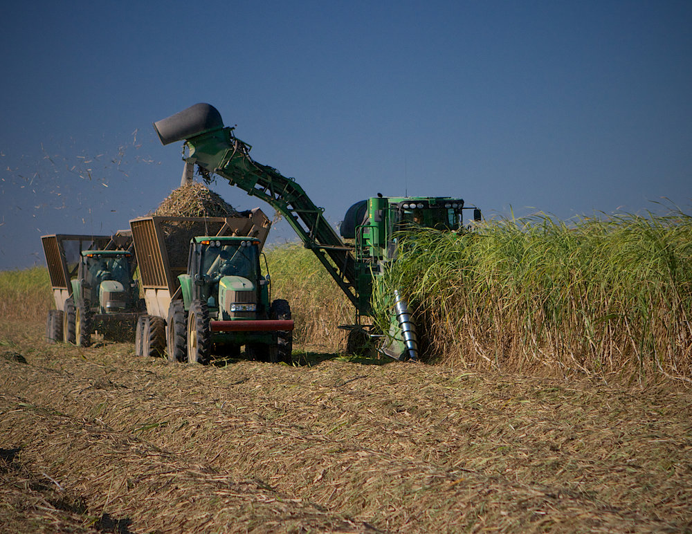 Louisiana sugarcane field during harvest (Photo by Louisiana Farm Bureau)