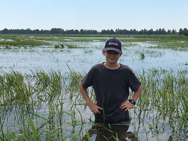 Human rain gauge on Paul Johnson's farm measures 17 inches of rain on rice.