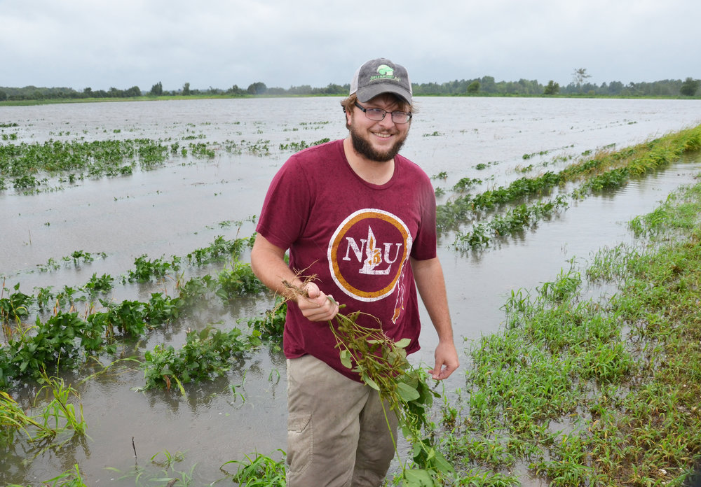 Farmer Josh Sikes holds a soybean plant in his field near Vinton, Louisiana. Sikes has 1,200 acres of soybeans, but not all of it flooded from Tropical Storm Harvey. Photo by Bruce Schultz/LSU AgCenter