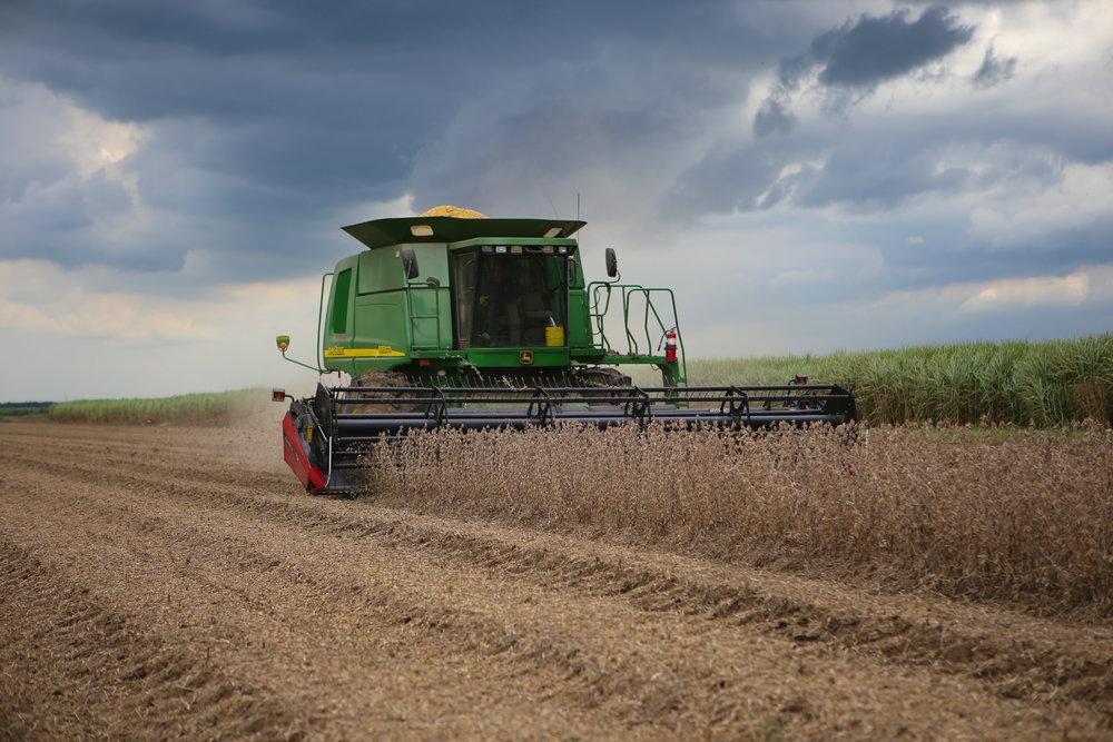 Soybean Harvest.jpg