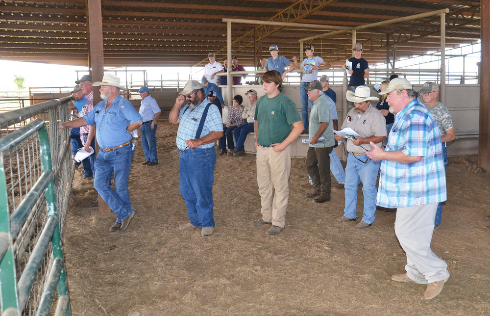 LSU AgCenter beef cattle specialist Tim Page tells cattle producers about the physical traits he considers when selecting a bull. Page spoke at a beef and forage field day in Mangham, Louisiana, on Sept. 21. Photo by Bruce Schultz/LSU AgCenter