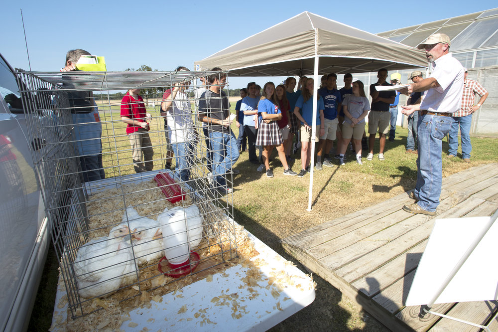Jason Holmes, LSU AgCenter agent in Union Parish, right, points to a pen containing 6-week-old chickens as he talks about the poultry industry at the northeast youth field day at the AgCenter Sweet Potato Research Station in Chase, Louisiana, on Sept. 27, 2017. Photo by Olivia McClure/LSU AgCenter