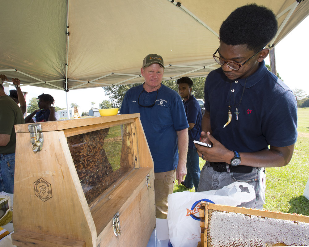 A student takes a closer look at a beehive at the northeast youth field day at the LSU AgCenter Sweet Potato Research Station in Chase, Louisiana, on Sept. 27, 2017. Photo by Olivia McClure/LSU AgCenter