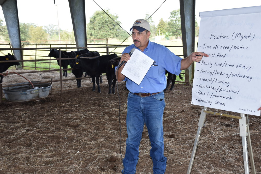 LSU AgCenter agent Stan Dutile discussed the importance of better management of cattle to avoid the loss of weight during transport at the Acadiana Cattle Producers Fall Field Day held at the UL-Lafayette Cade Farm in St. Martinville on Oct. 21, 2017. Photo by Johnny Morgan/LSU AgCenter
