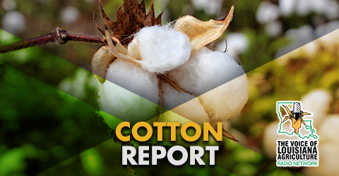 Carey Martin has the latest news and market information affecting the Louisiana cotton industry on The Voice of Louisiana Agriculture Radio Network.