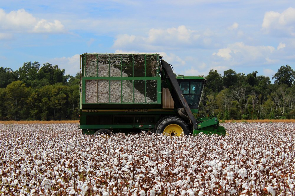 Louisiana cotton farmers are expected to plant 2.6% less cotton in 2018.