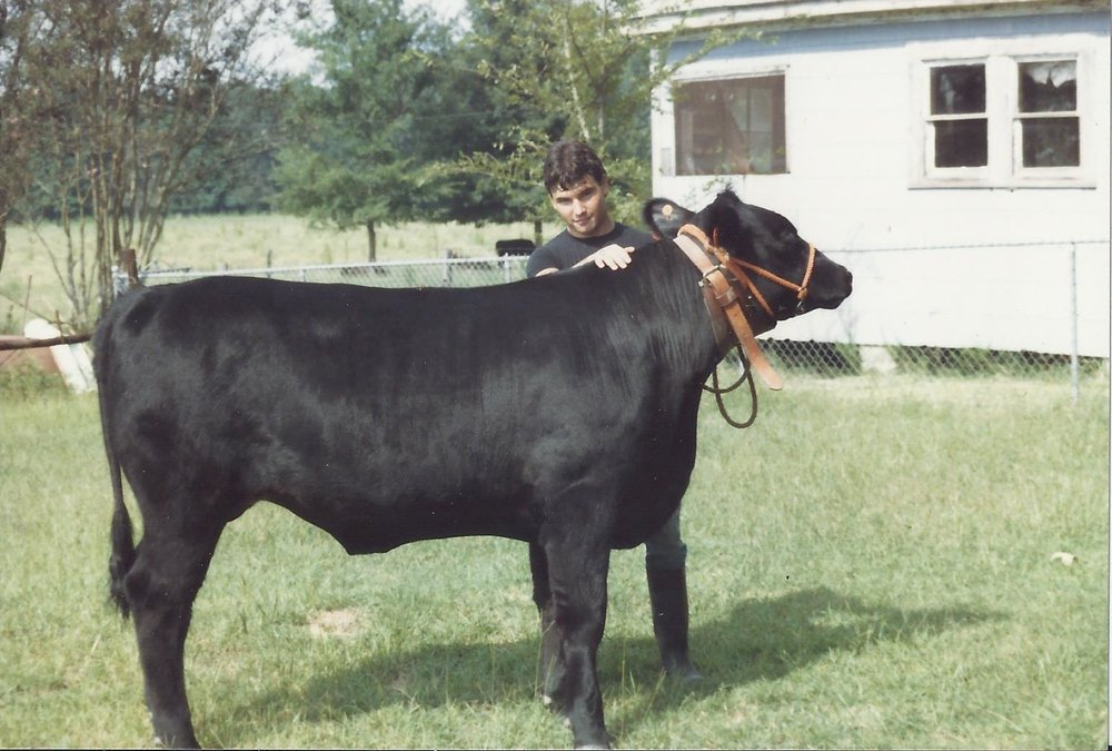 Showing livestock in the 4-H program was my favorite activity as a teenager.  I showed market steers, angus heifers, market lambs and market hogs.