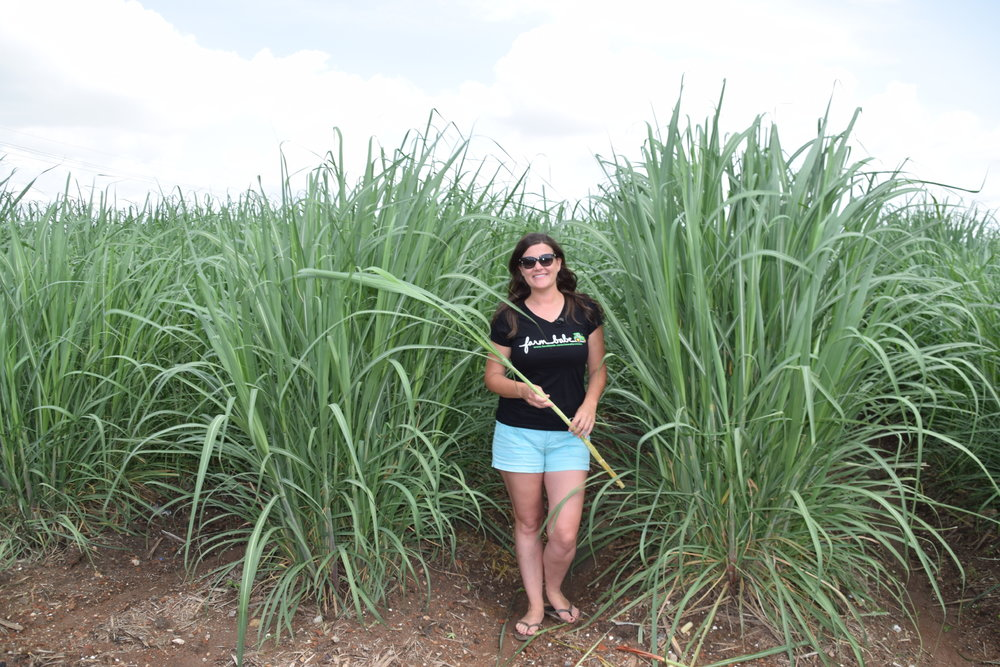 Michelle Miller, the Farm Babe, visited a sugarcane farm in Reserve, Louisiana, while in New Orleans for the 96th annual Louisiana Farm Bureau Convention. Miller advocates for farmers, fair food labeling and busts agricultural myths as the Farm Babe.