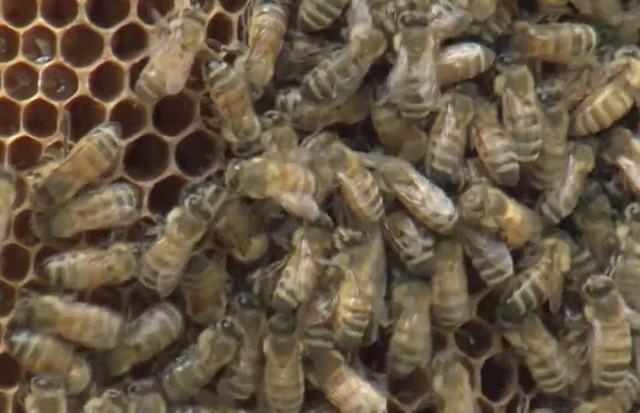 Bees Close.png