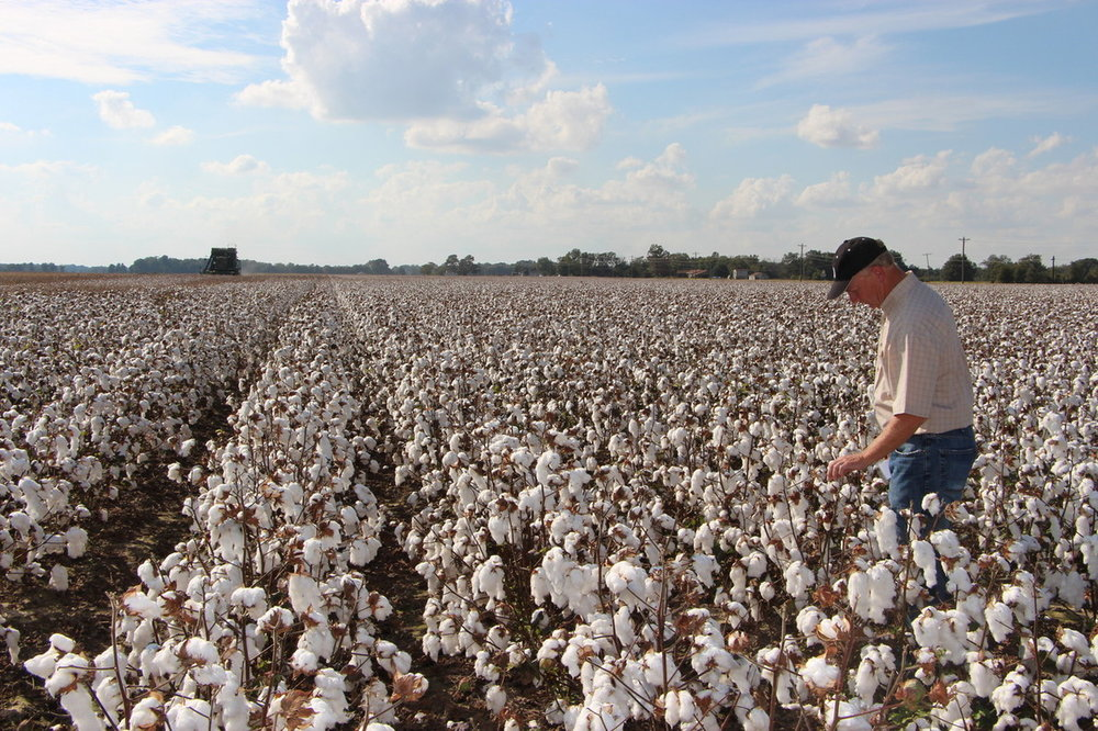 cotton survey.jpg