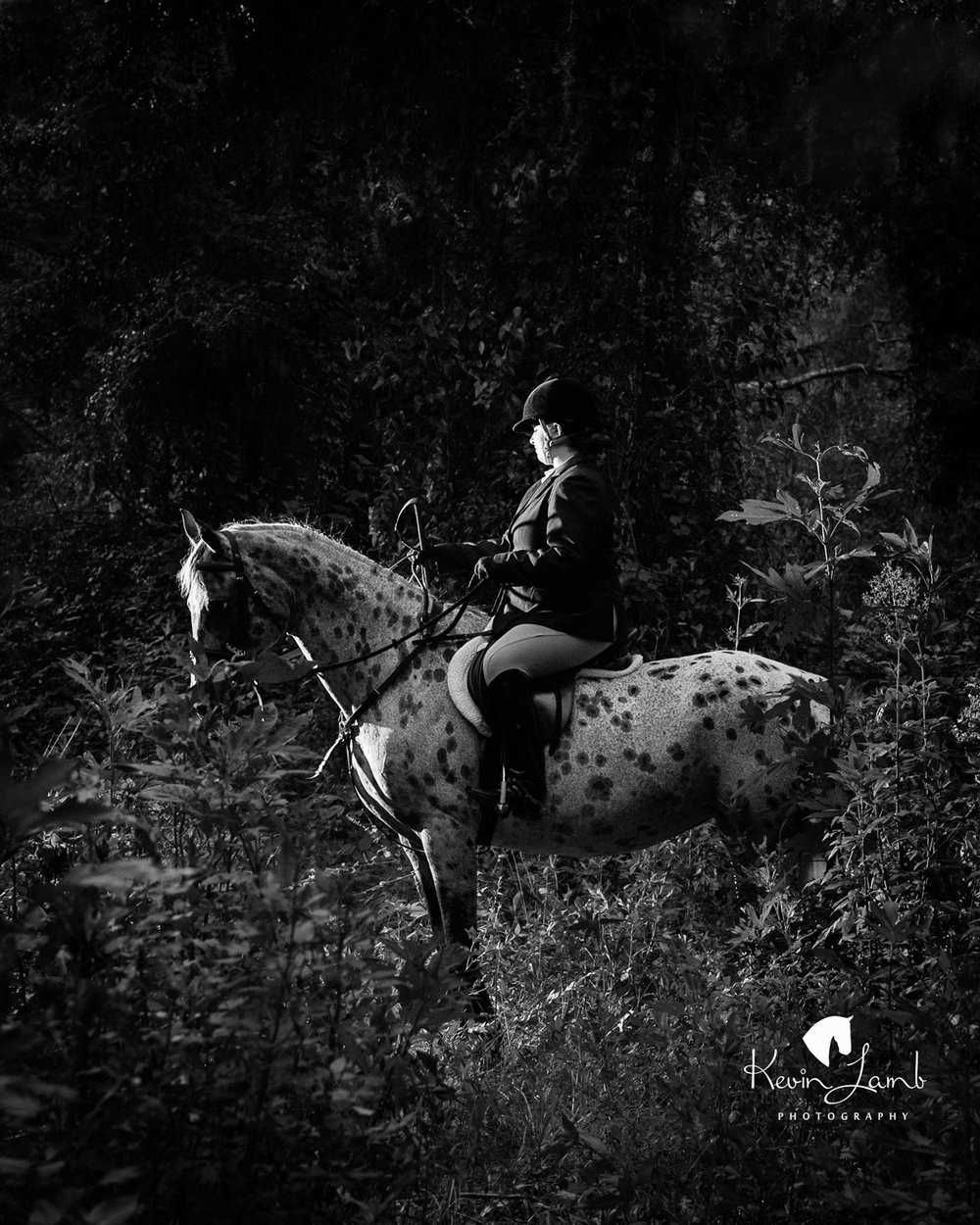 KevinLambEquestrianPhotography-fbi6400.jpg