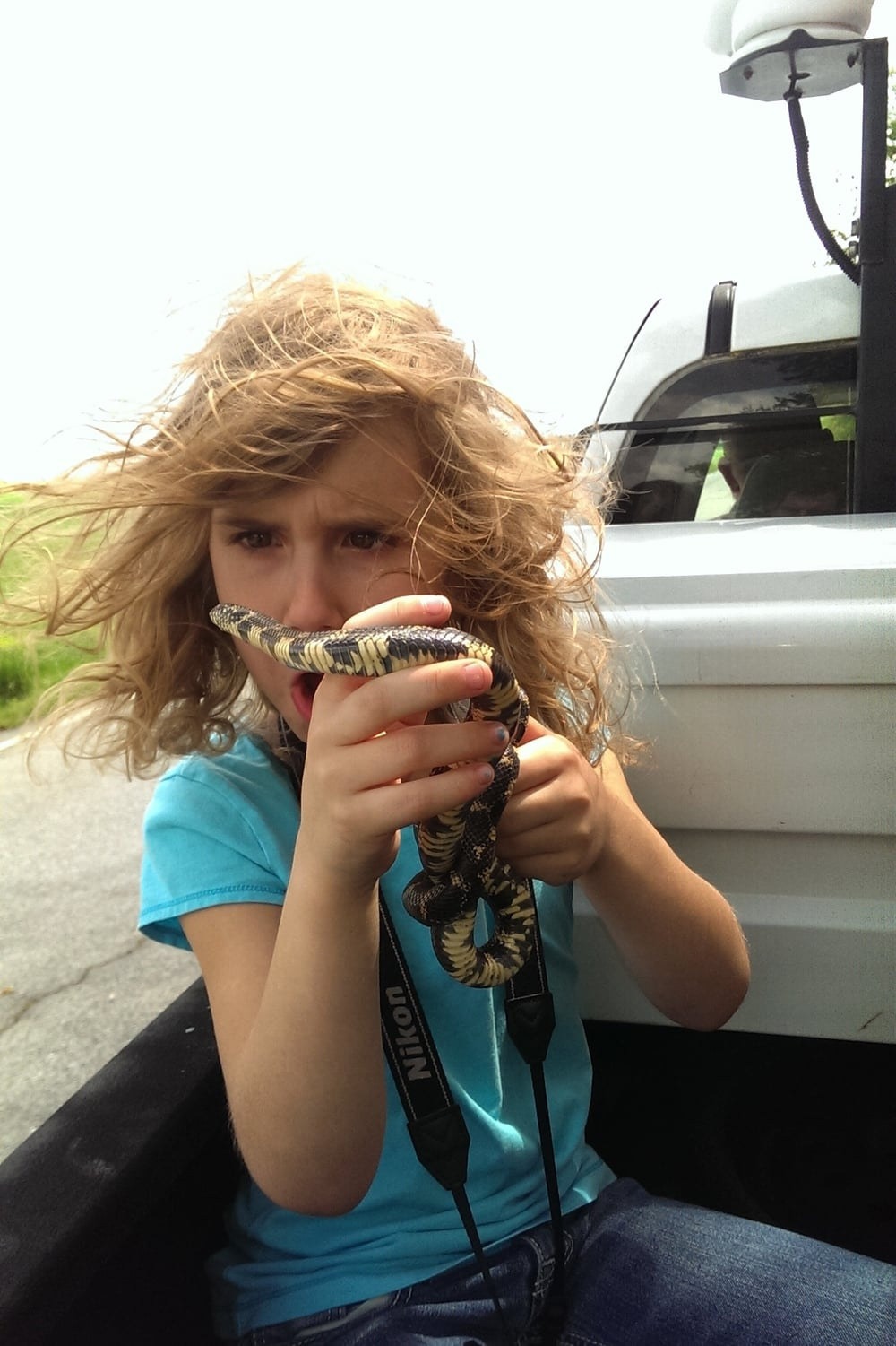Eastern Kingsnake - Lily loved that snake and this crappy cell phone shot ended up being my favorite photo of 2015, hands down.  We were getting a ride from a ranger in the back of his pick-up to release a different snake where it was found.  This snake went on a little ride but was also returned to where it was found.