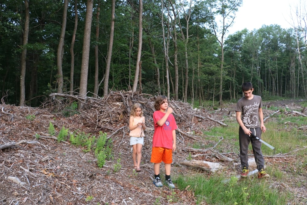 Habitat - The kids and I checked this habitat out.  These brush piles looked great and sure enough, we found two sheds.