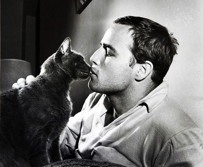 Marlon Brando was a great lover of cats. Photo credit: Life Magazine. Public Domain.