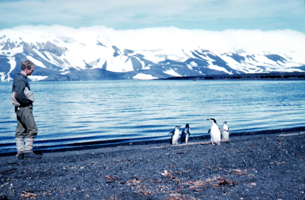 "Rear Admiral Harley D. Nygren, NOAA Corps (retired), 1962. ""Penguins on Deception Island"". NOAA Commons."