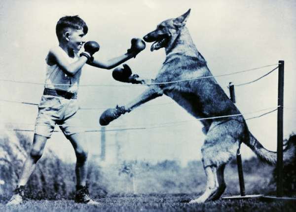 Vintage Photo for Resilience Post (Boy and Dog Boxing)