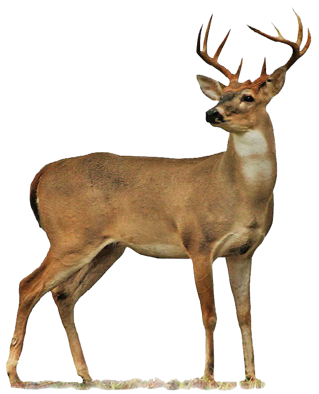 Image of Deer (CC0)