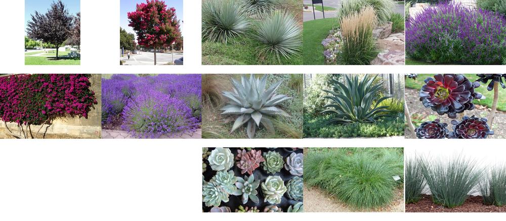Planting Pallette: 2118 Oak Park Lane - Craftsman Duplex, Santa Barbara, CA