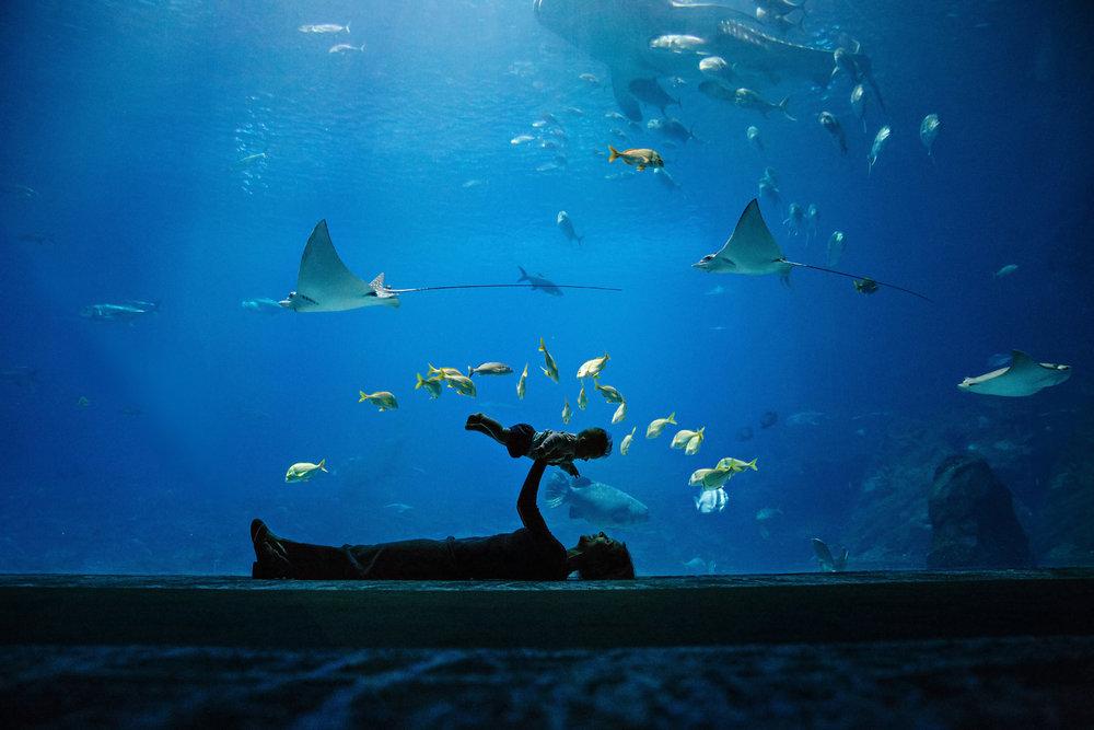 Aquarium 1 IG FB.jpg