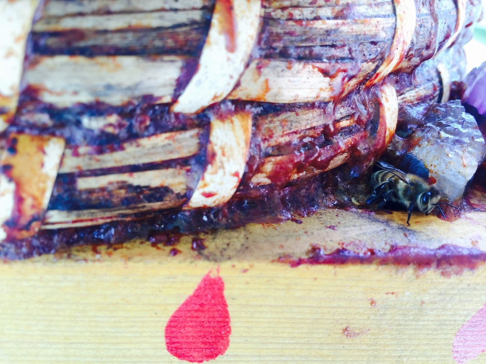 A bee peaks out of one of the hive's many entrances fortified with stones and propolis.