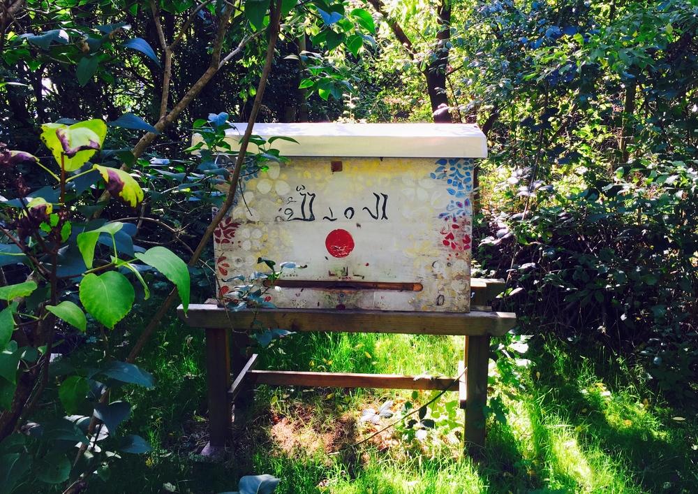 One room hive