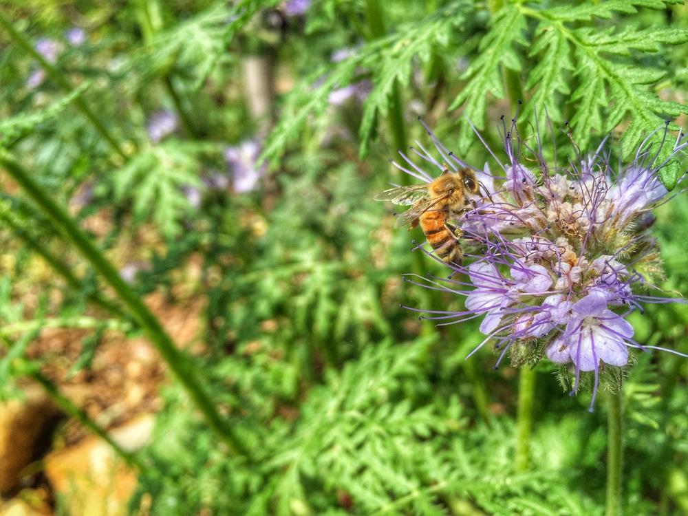 AriellaDaly_purple_flower