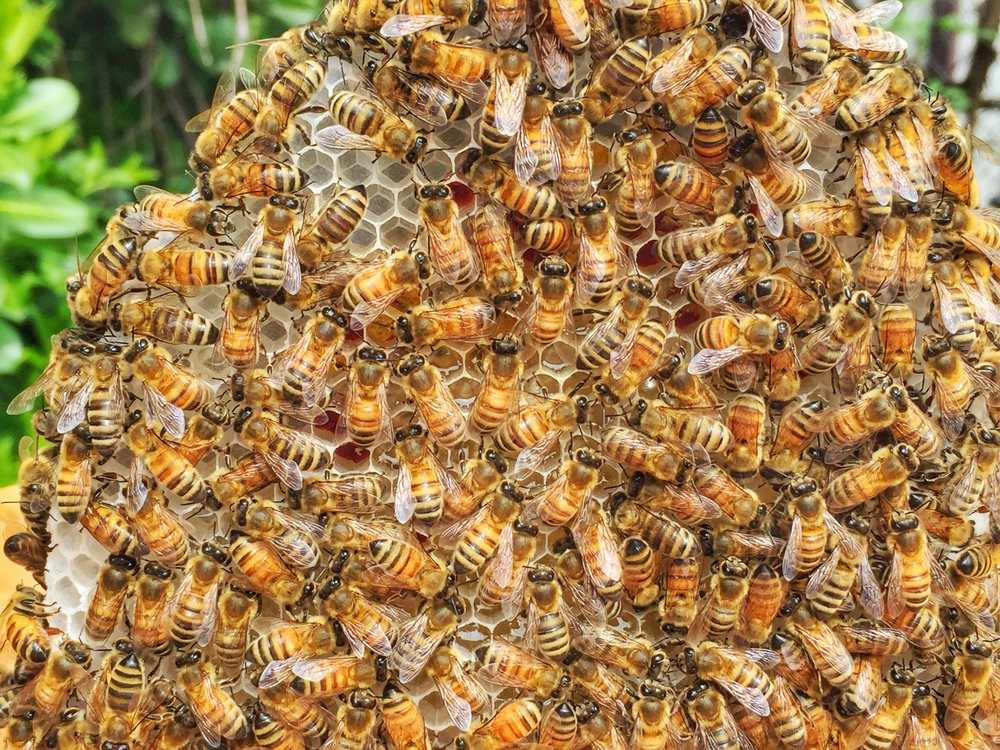 AriellaDaly_bees