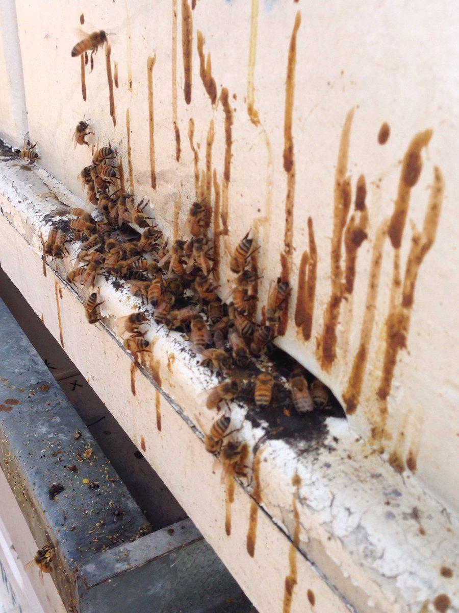 nosema hive entrance.jpg