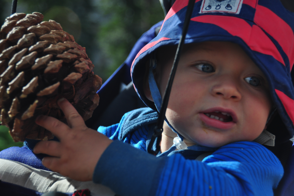 pine cone - hiking with a baby - discovering the world