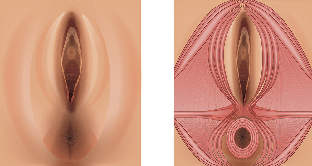 Vulva and Perineum muscles - Perineal massage