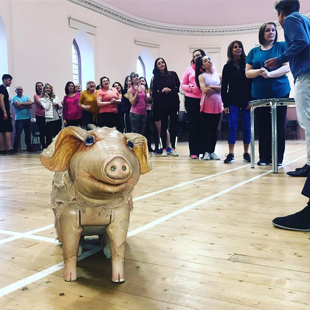 Our #VIP (very important pig) has joined us for rehearsals today! #BettyBlueEyes