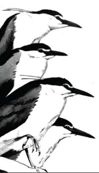 waterbirds_logo_hires.png