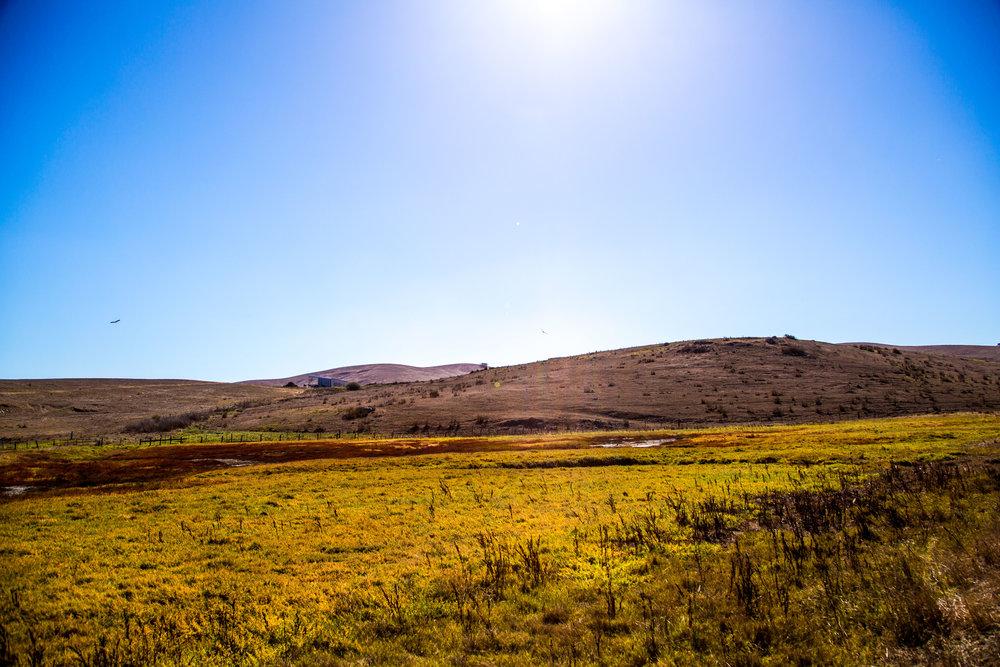 True-Grass-Landscape8.jpg