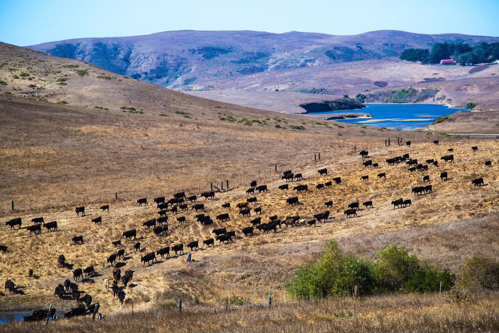 True-Grass-Landscape18.jpg