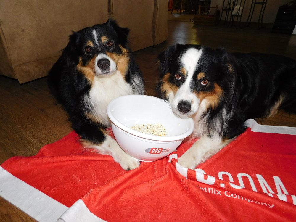 POPCORN DOGS - Lucky & Max 06292018.jpg