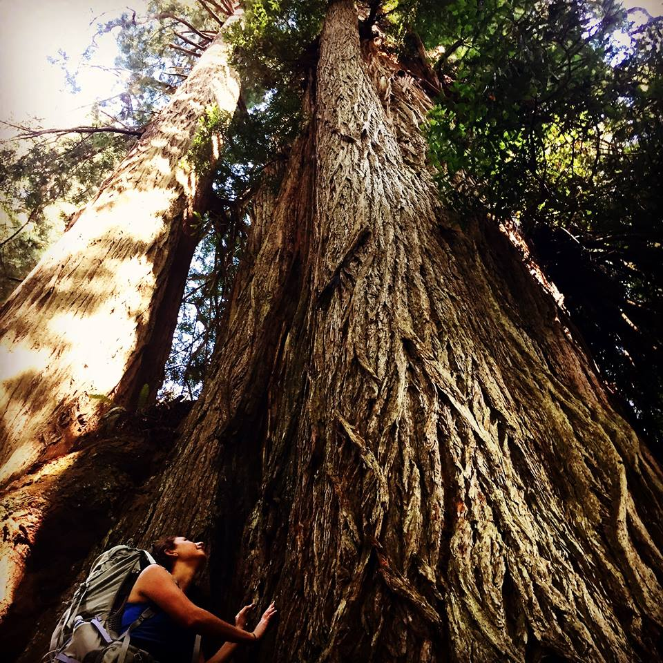 in awe of the magnificent redwoods