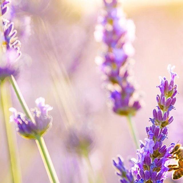 Ven a relajarte con nosotros! Para que los años no pasen por ti  #spa #lavender #relax #aromaterapia #saluddelapiel #costarica #estetica #curridabat