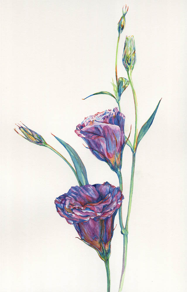 Two lisianthus, 2015.
