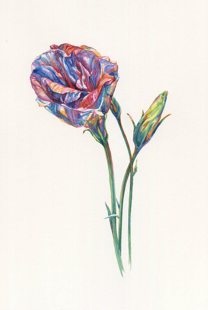 Single Lisianthus, 2015.