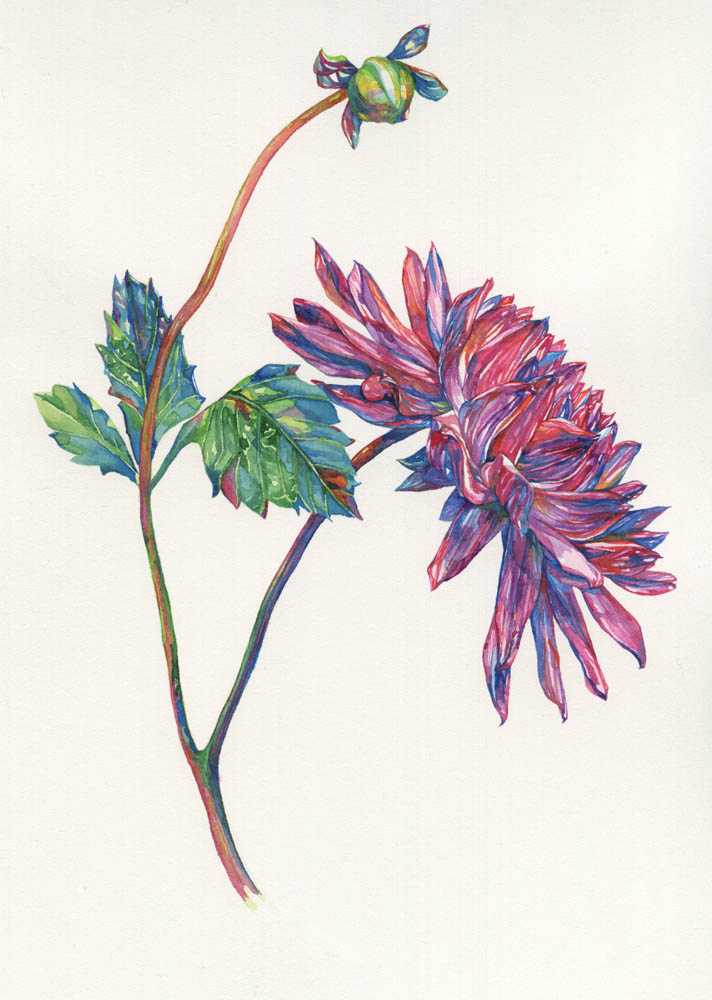 Dahlia and bud, 2016. SOLD