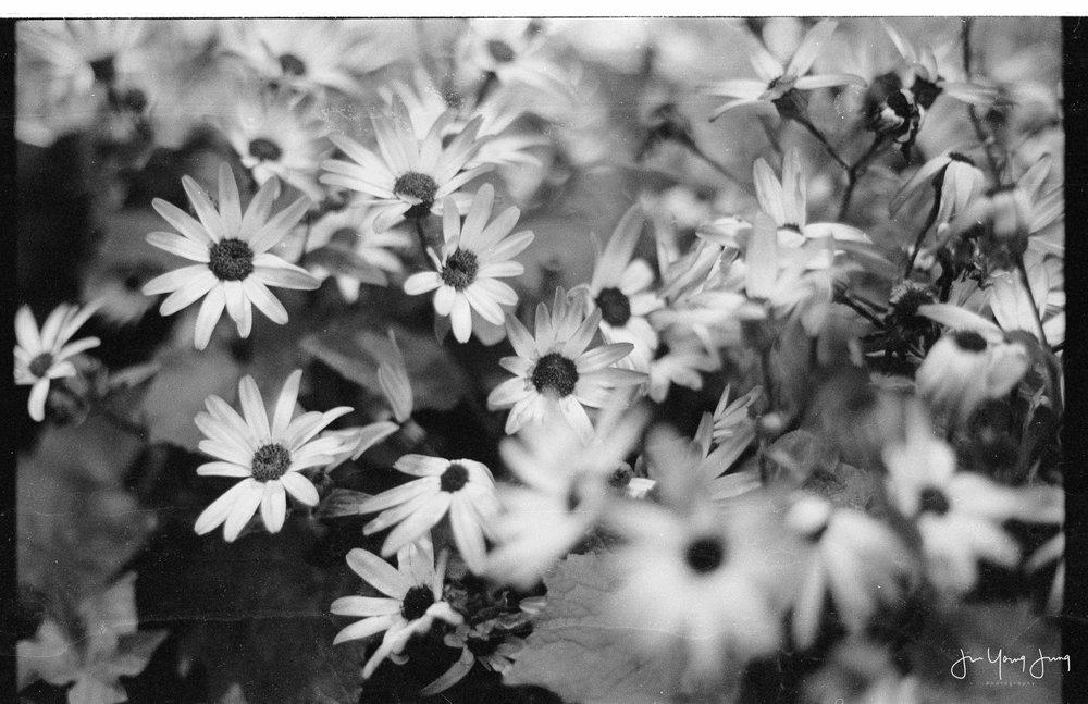 Kodak Tri-X - 1/60 @ f/2
