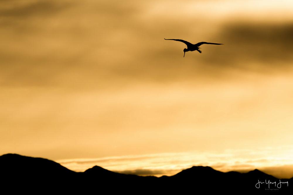 Ibis & Sunrise