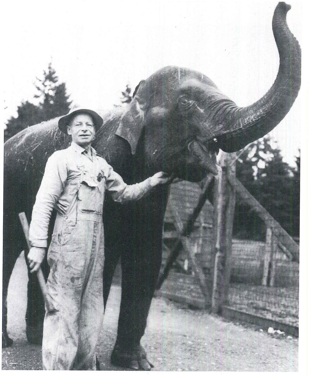 Rosie the elephant lived at the Forest Park zoo. // Unknown