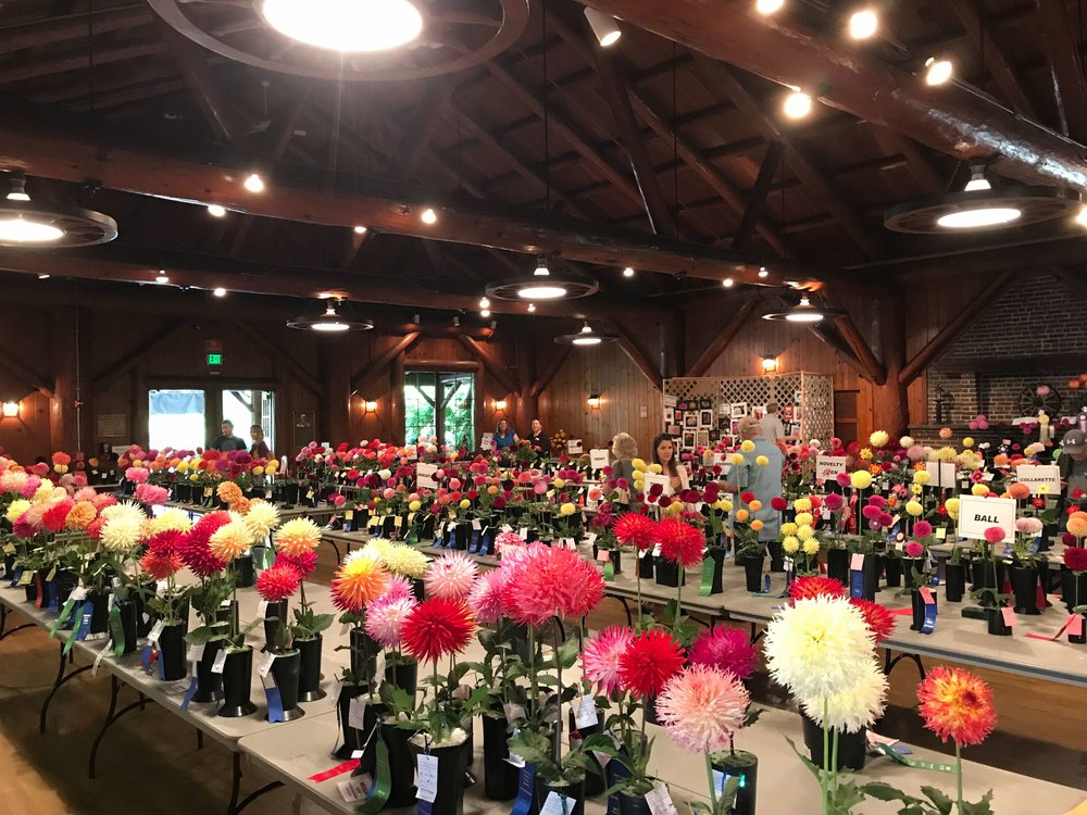 A modern day shot of Floral Hall's interior during the 2017 Dahlia show // Garret Hunt